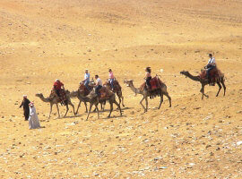 Camel ride near Cairo Pyramids